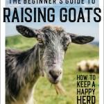 raising-goats-for-beginners