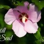 Be Still My Soul {A Sunday Hymn}
