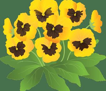 黄色いパンジーのイラスト