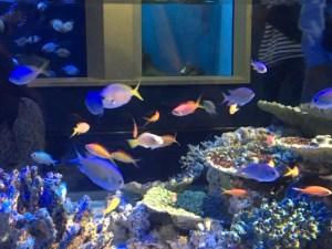 竹島水族館の水槽