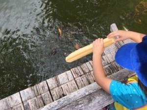ひがし公園の池と鯉