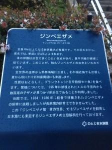 のとじま水族館ジンベイザメ看板