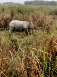PHOTOGRAPHY CONTRIBUTED BY:- AAMIYA PARIHAR, CLASS:-X C K.V. NFR MALIGAON, from a tour to Kaziranga Wildlife Sanctuary
