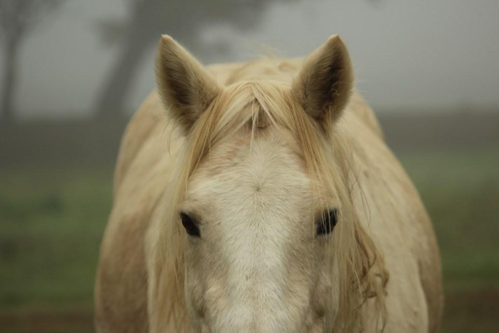 ¿Debemos esquilar las orejas y bigote del caballo?