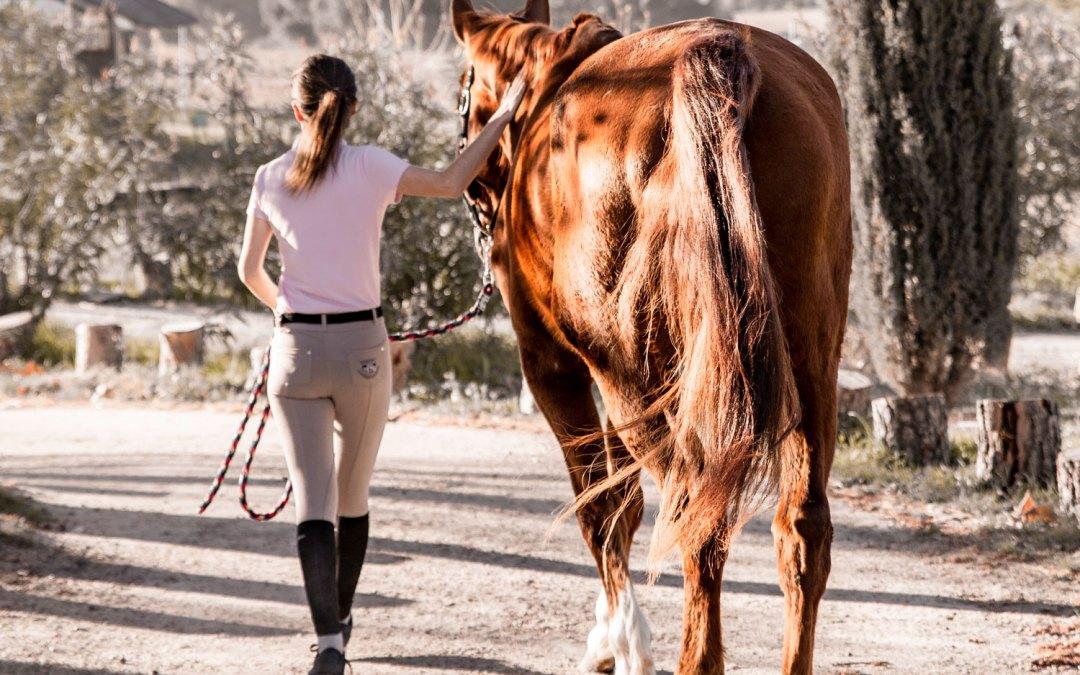 Comprar un caballo, ¿qué hay que valorar?