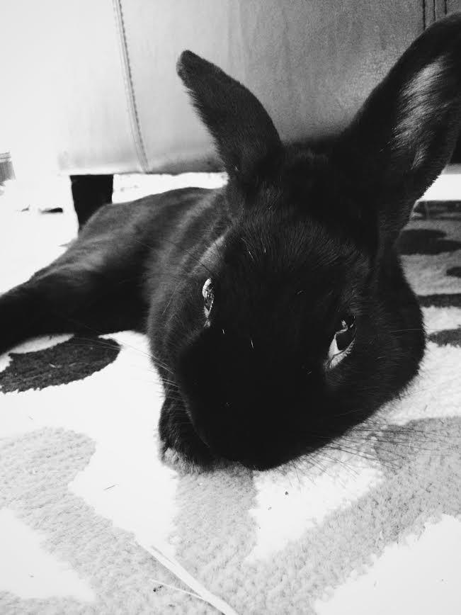 Best Cute Wallpapers For Facebook Cute Rabbit Photos Funny Bunny Videos Bunny Blog