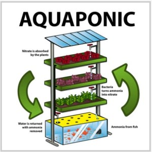 Stacked Indoor Aquaponic System sketch