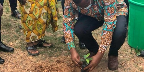 This guide can be accessed at: Adansi Akrofuom Dce Mp Join Forces To Grow 9k Trees Under Green Ghana Project Myinfo Com Gh