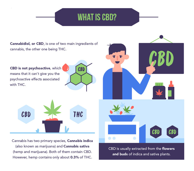 CBD Oil Basics