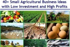 Top and Best Small Agricultural Business Ideas with Low Investment