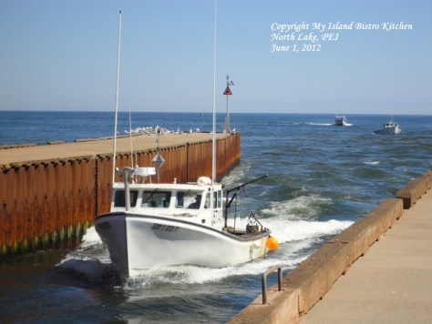 Lobster Fishing Boats Filled With Their Day's Catch Returning to Port at North Lake, PEI [June 1, 2012]