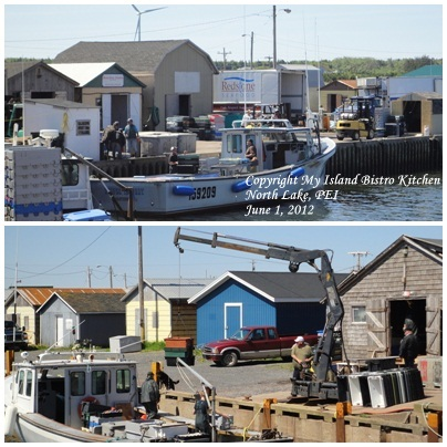 Unloading the Day's Catch at North Lake Harbour [June 1, 2012]