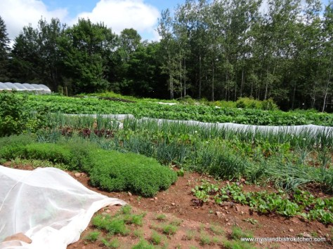 View of part of the gardens at Just A Little Farm