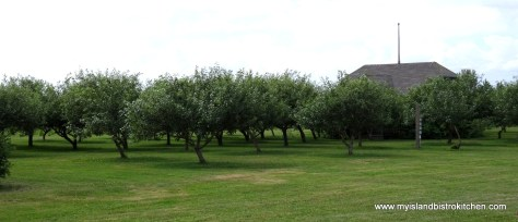 Apple Orchard at Rossignol Winery, Little Sands, PEI