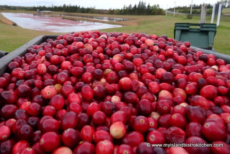 Freshly-harvested Cranberries from Mikita Farms in Farmington, PEI
