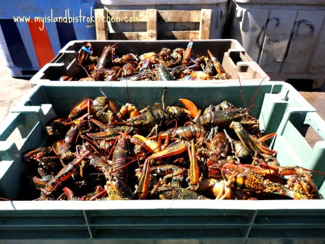 PEI Lobsters