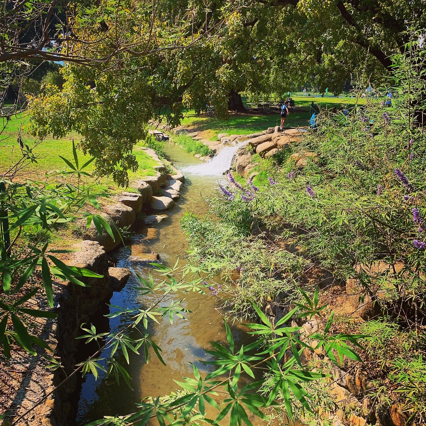 A stream flows through Hurshat Tal National Park in the Hula Valley