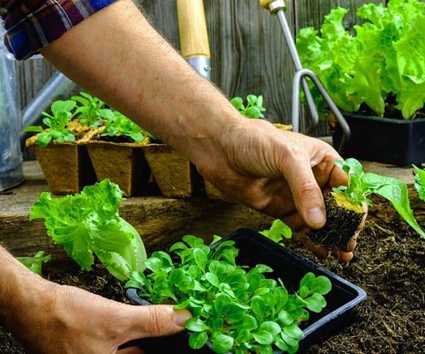 giardinaggio come antistress