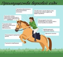 Лошади ваши лучшие друзья, они помогут вам снять стресс и никогда не будут осуждать вас