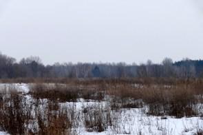 Сразу за лесом течет река Северский Донец