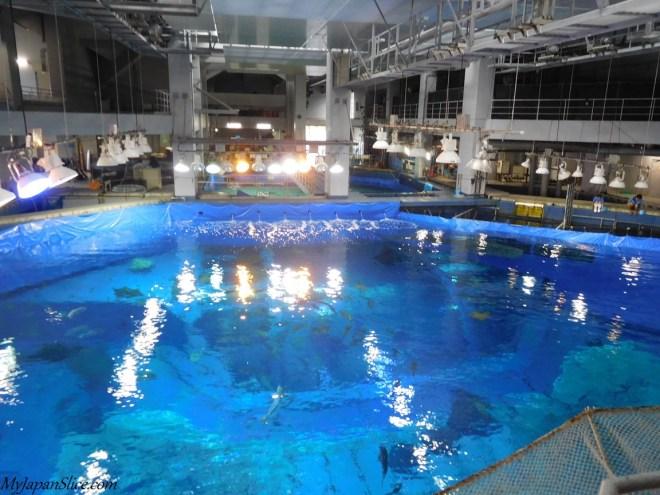 okinawa_churaumi_aquarium_3