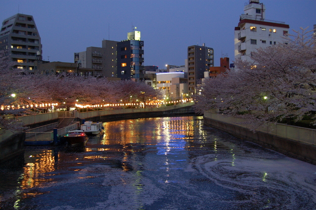 門前仲町_monzen_nakacho_hanami_sakura