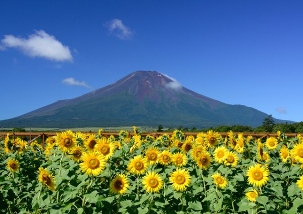 japanese_summer_fuji