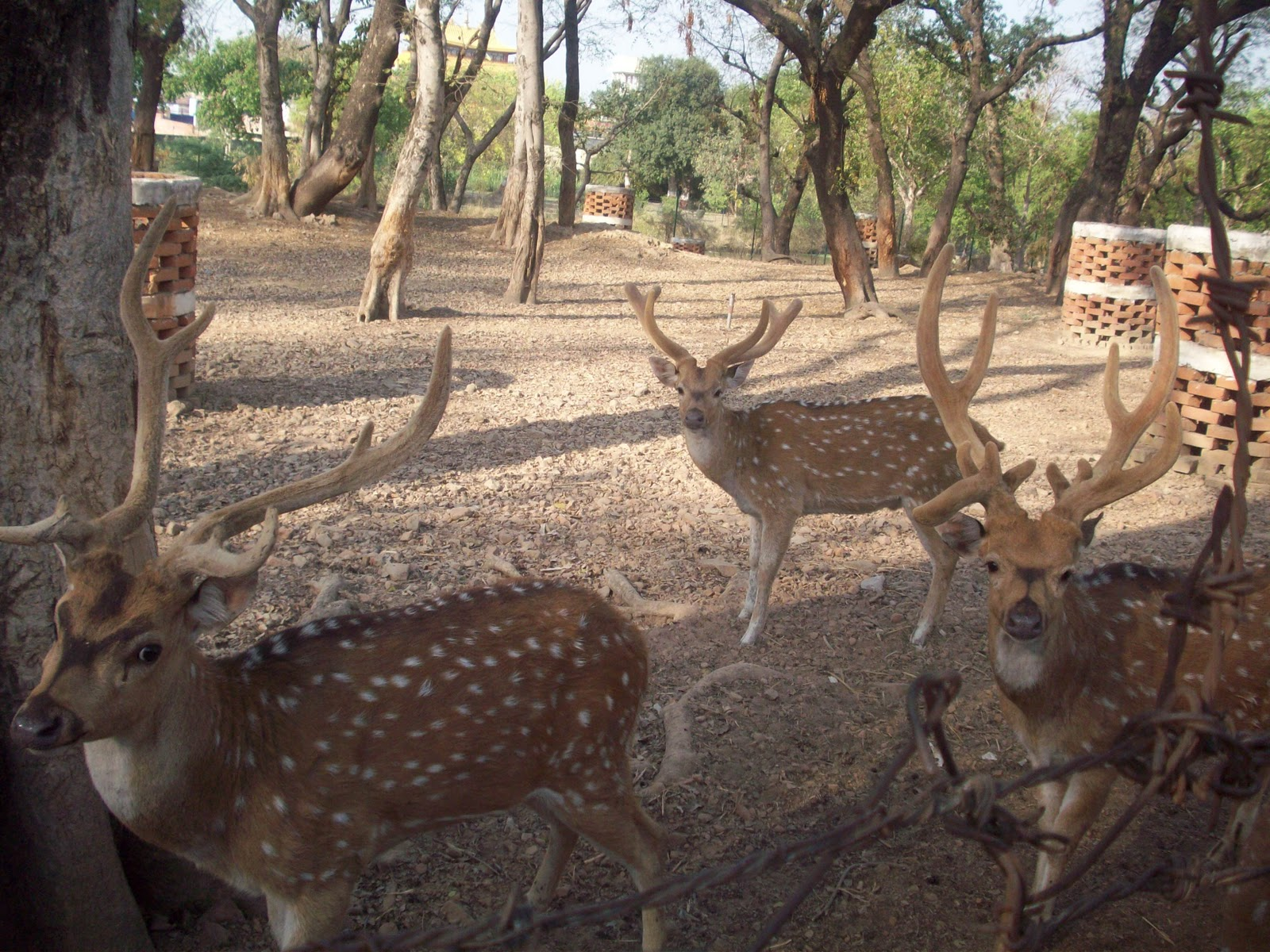 Fish aquarium in varanasi - Deer Park Varanasi A Safe Dwelling Place For The Animals My Journey Through India