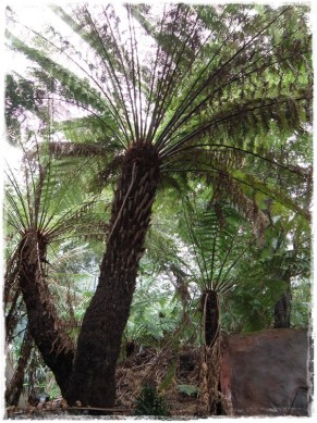 Rainforest Installation (I)