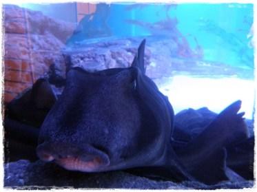 Giant grumpy fish!