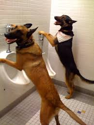 dog in restroom