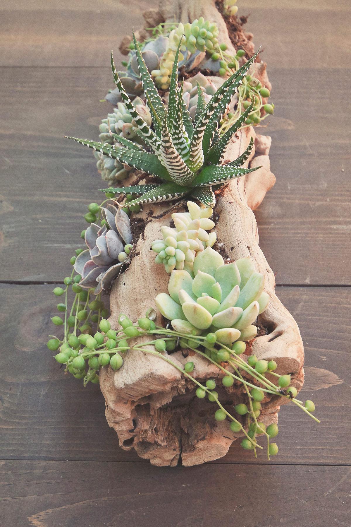Small Inside Plants