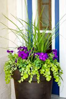 Amazing Front Door Container Gardening Ideas And Styling Tips