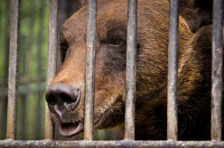2012-07-22 - Priamursky Zoosad - Osa Pidiendo