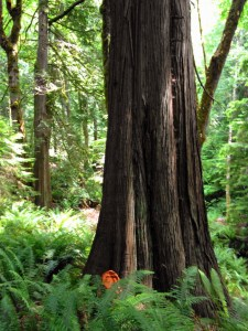photo of Old Growth Trees at 773 Payne Rd Quilcene