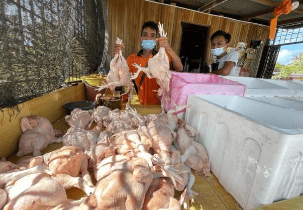 Total Lockdown: Ayam Pula Tak Laku