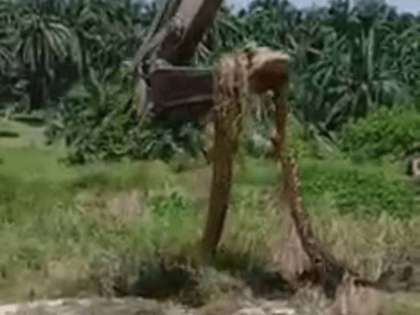 [VIDEO] Guna Jengkaut Alih Ular 'Gergasi'