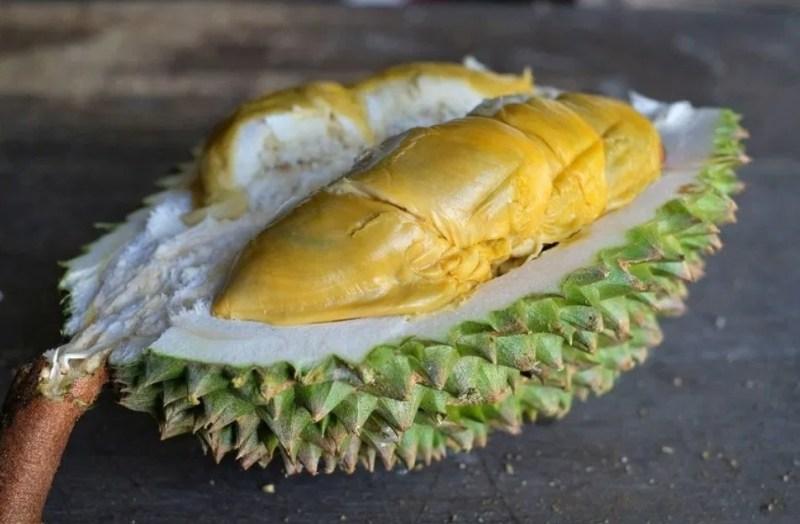 Kemunculan durian Tupai King