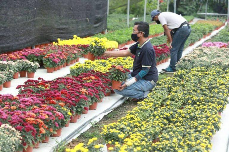Industri bunga Cameron Highlands lumpuh — MYKMU.NET