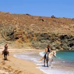 Mykonos horse riding - Horseland Mykonos