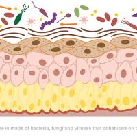 Липидный барьер кожи, микробиом и ламелярные эмульсии