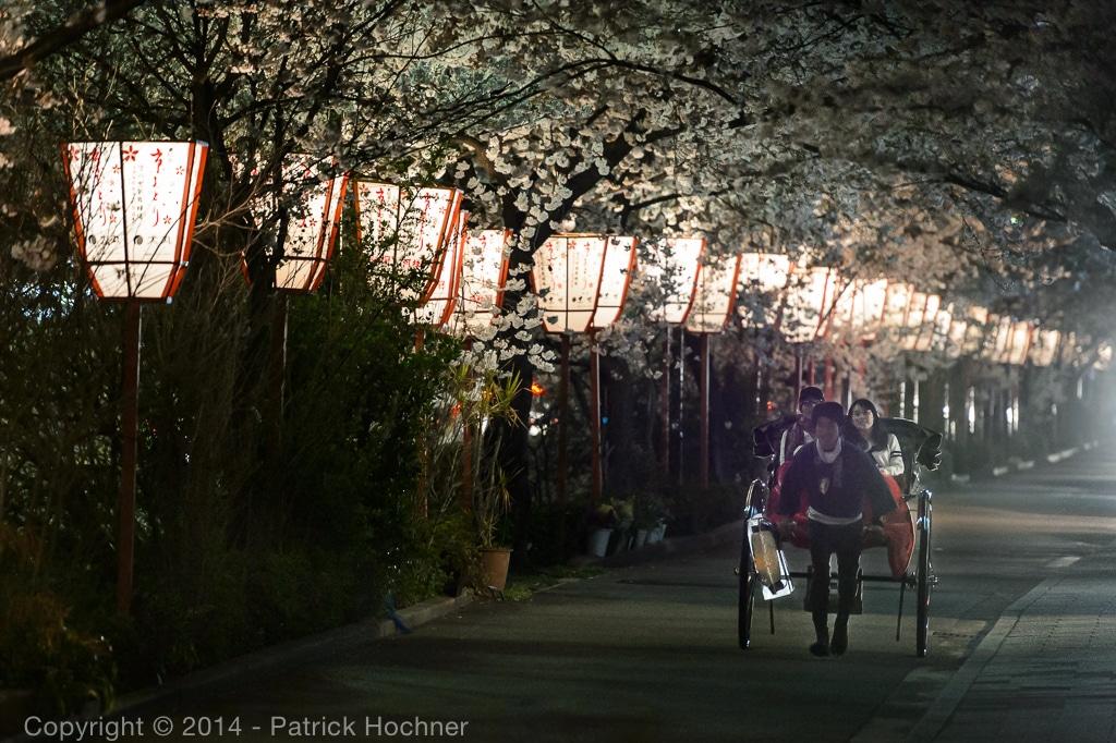 During the Hanami season in April, Miyagawacho