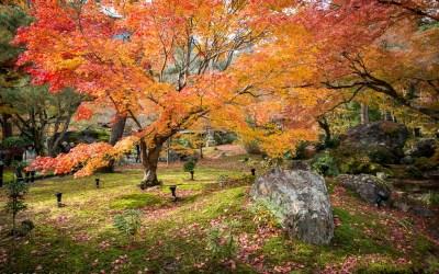 Hogon-In Temple & Garden