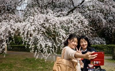 The Sakura Season has started!