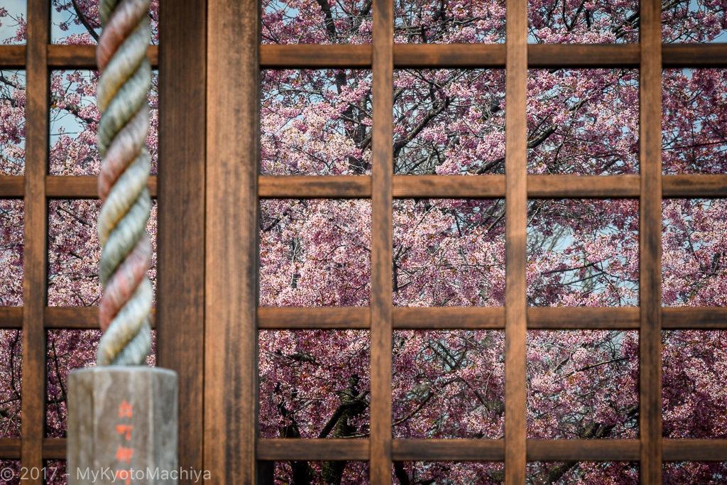 170329_Kyoto-Chotokuji-Cherry_Blossom-500710