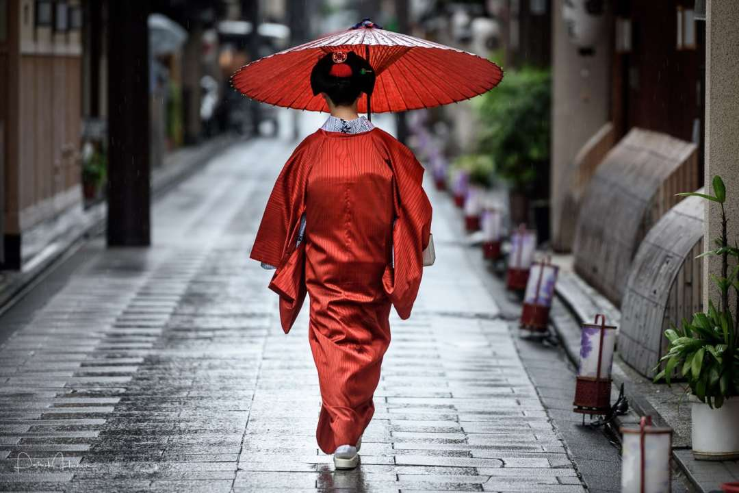 Maiko walking down the Miyagawa-Cho Street, Kyoto