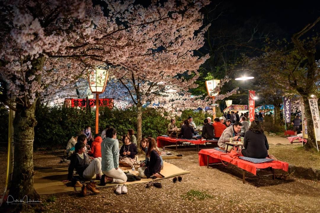 Hanami Party in the Maruyama Koen Park, Kyoto
