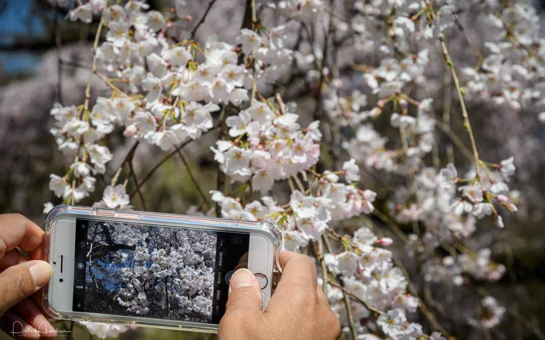 Full Bloom Capture