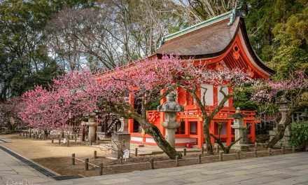 Plum Blossom at Kitano Tenmangu