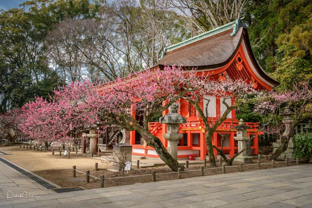 A Sessha (auxiliary shrine) surrounded by plum Blossom at Kitano Tenmangu Shrine